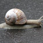 Snail, key ingredient in Korean skincare